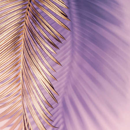 Golden tropical leaf and shadow on pink