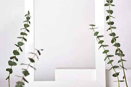 Premium white podium on white background with eucalyptus branches. Mock up for presentation of cosmetic products Stock Photo