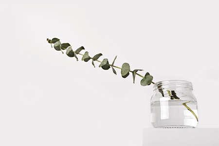 Eucalyptus in glass jar on white podium. Spring fragrances concept, minimal style, low angle