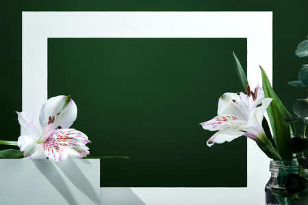 White frame on green background with White flowers and shadows, front view Stock Photo