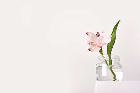 Beautiful white flowers in glass jar on white podium. Spring fragrances concept, minimal style, low angle Stock Photo