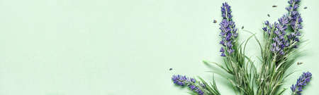 Lavender bouquet on mint green banner. Aromatherapy treatment and Skincare spa cosmetics. Minimal background concept Stock Photo