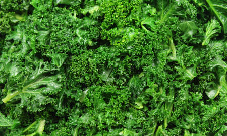 Blanched Green Curly Kale (Borecole) - a Food Background photo