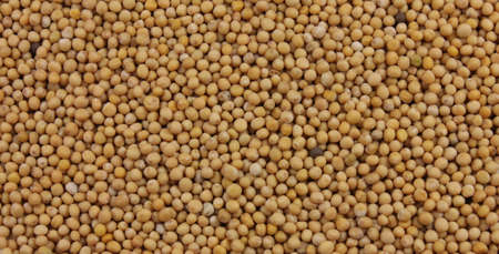 Background of mustard seeds Stock Photo - 13191481
