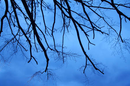 Branches on blue sky background photo