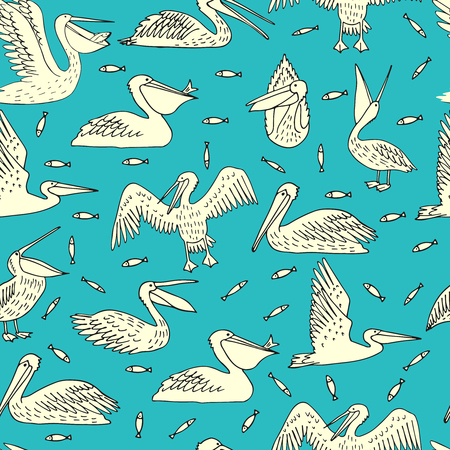 Pelicans, illustration, vector Ilustração