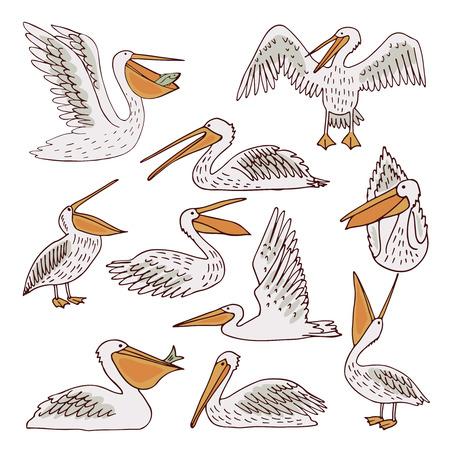 Pelicans, illustration, vector Banco de Imagens - 85696108