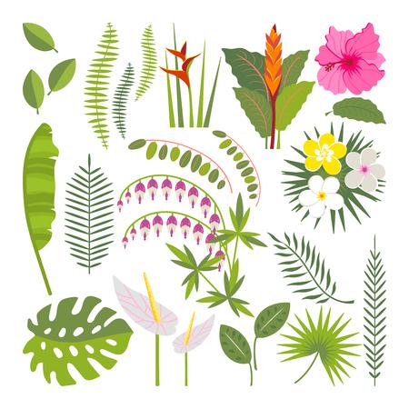 Vector set of tropical leaves. Palm leaf, banana leaf, hibiscus, plumeria flowers. Jungle trees.Botanical floral illustration Illustration