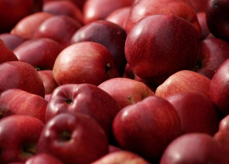 A pile of ripe red apples sit in a bin at the farm market of an apple orchard. Stock Photo - 3730694