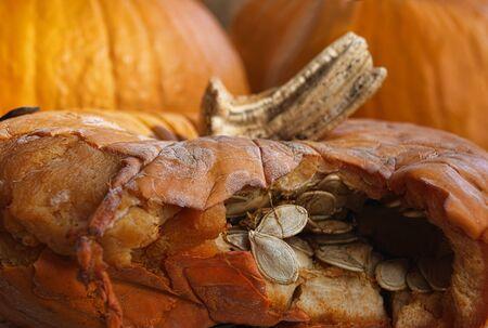 breaking out: Semillas de calabaza son romper de una c�scara de calabaza.