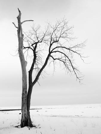 bare tree: Bare Tree in the Winter on Lake Erie, Ohio Stock Photo