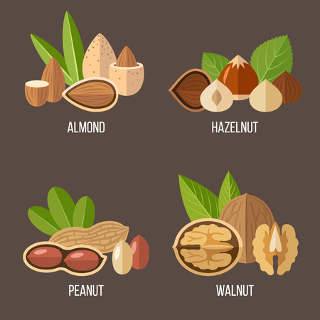 Vector collection of nuts: almond, hazelnut, peanut, walnut. Flat style.