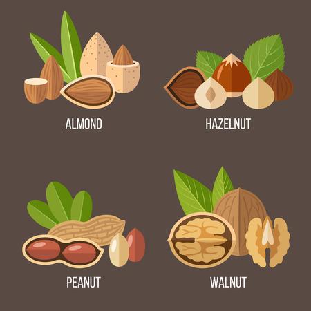 Vector raccolta di frutta secca: mandorle, nocciole, arachidi, noce. stile piatto.