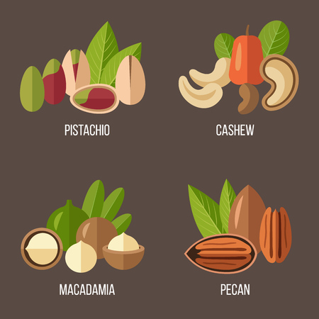 macadamia nut: Vector collection of nuts: pistachio, cashew, macadamia, pecan. Flat style. Illustration