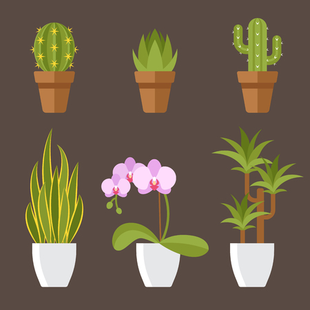 Vector set of home plants in pots for interior decoration. Cactuses, aloe, snake plant, orchid flower, dracaena. Flat style.