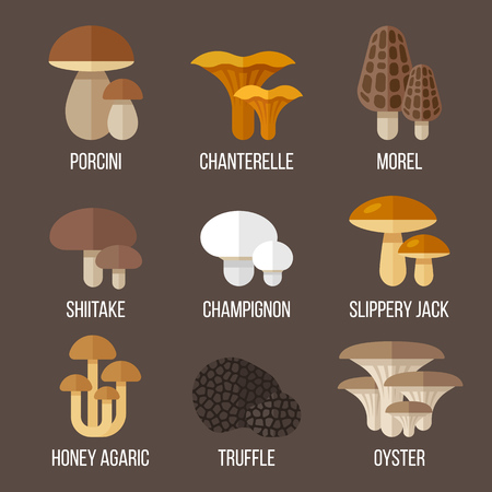 morel: Vector set of different kinds of edible mushrooms. Flat style.