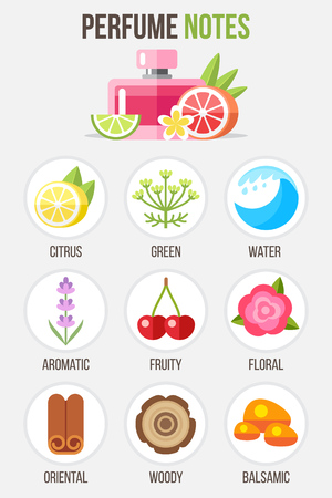 Illustrations of main perfume notes and ingredients. Infographics elements. Flat style. Illustration