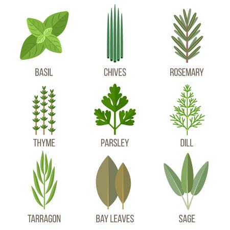 Vector set of culinary herbs illustrations. Flat style. 일러스트
