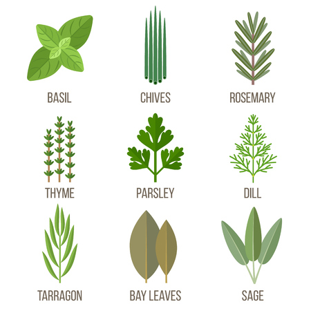 Vector set of culinary herbs illustrations. Flat style. Ilustrace