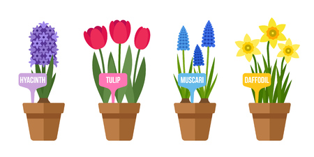 Vector set of potted spring flowers with labels. Flat style.