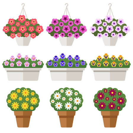 Vector set of different outdoor flowers in flowerpots: petunia, pansy, chrysanthemum. Isolated on white. Flat style. 일러스트