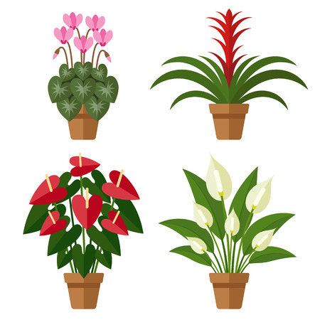 Vector set of indoor blooming flowers in pots. Flat style.