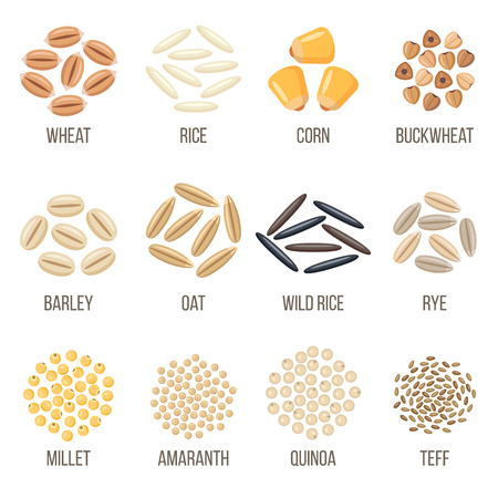 Set of cereal grains named, design illustration. Illustration