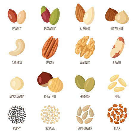 Vector set of named nuts and seeds Flat style. 矢量图像