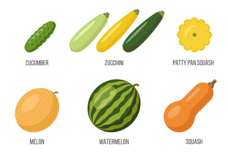 Vector set of different cucurbits. Flat style.