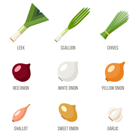 Illustration of a set of different kinds of onions with names