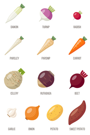 Vector set of root vegetables named flat style.