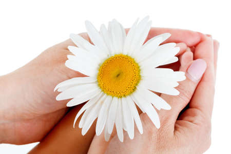 Camomile in the hands of the boy and mother. On a white background