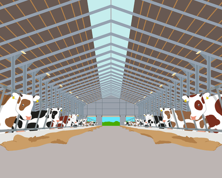 Inside of the interior of the cowshed with the cows. illustration