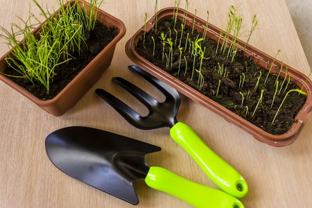 caring for seedlings in the spring and preparation for transplantation. Stock Photo