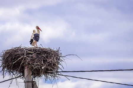 A pair of storks made a nest on a telegraph pole Stock Photo