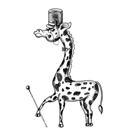 stovepipe hat: giraffe illustration Illustration