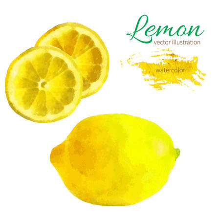 lemon: lim�n, rebanada de lim�n mano ilustraci�n acuarela dibujada sobre fondo blanco. Ilustraci�n del vector de la fruta
