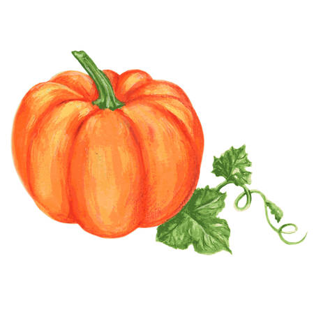 Pumpkin watercolor illustration isolated on white background 向量圖像