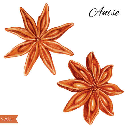 star anise: Star anise graphic illustration isolated on white background. Hand drawn vector sketch. Design food elements. Series of food and ingredients for cooking. Illustration