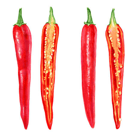 Fresh watercolor red chili pepper illustration, cut into slices, half chili pepper. Vector food elements. Can be used for banner, menu, cards, invitations etc.