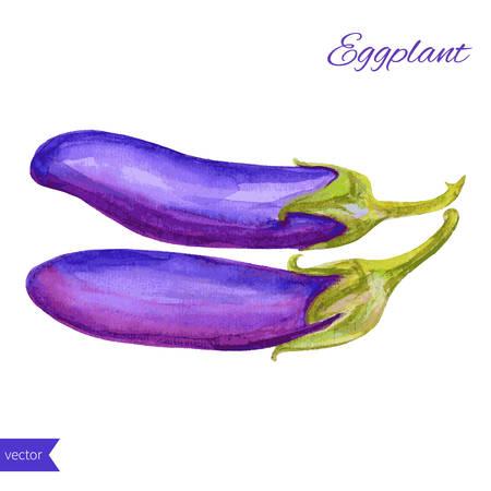aubergine: Fresh eggplant aubergine vegetable isolated on white background, watercolor illustration