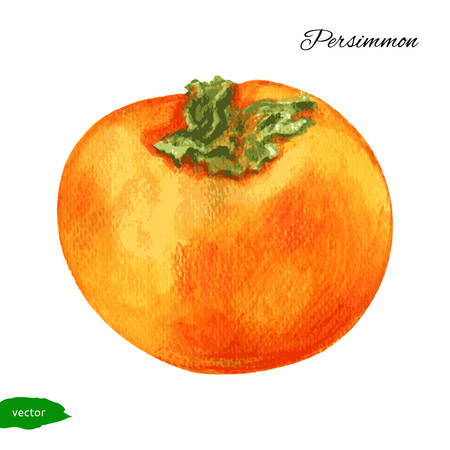 WatercolorPersimmon illustration isolated on white background