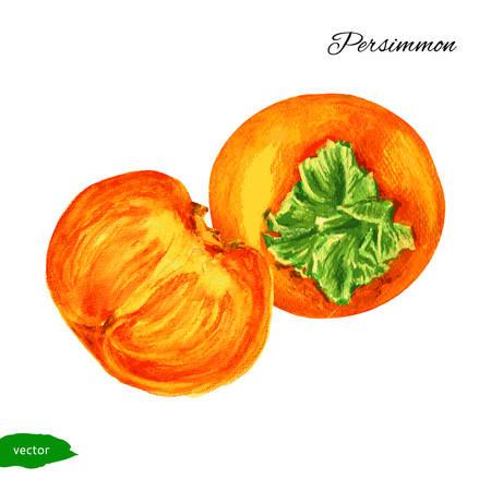 persimmon, persimmon half watercolor illustration Illustration