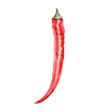 chilly: Fresh watercolor red chili pepper illustration. Food elements. Illustration