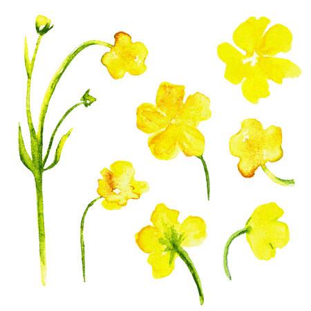 Acquerello fiori gialli isolati su sfondo bianco. Elementi di disegno floreale, disegnati a mano artistico illustrazione pittura