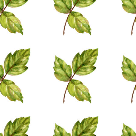 used ornament: Watercolor leaves illustration, seamless pattern, ornament with green leaves, Nature theme, Can be used for  cards, wedding invitations, gift boxes, wallpapers, backgrounds etc