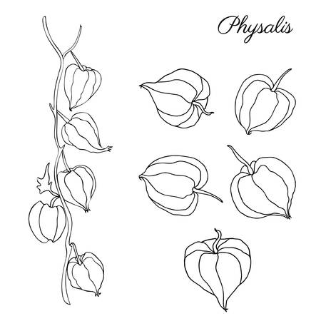 Physalis hand drawn doodle sketch isolated on white background, graphic berry set, Organic healthy food ingredients, black line art illustration, for healthy market, restaurant menu, cosmetics Ilustrace