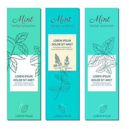 natural healing: Set of vertical banners with hand drawn sketch mint leaves, mint branch, mint flowers,  isolated on white, Natural cooking doodle spicy ingredients botanical illustration, Healing herb