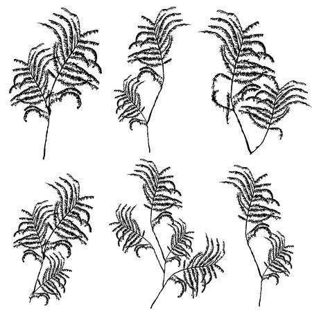 botanical medicine: Silhouettes of leaves, botanical illustration isolated on white background, .Monochrome floral drawing.  sketch for cosmetic, medicine, package design, cards, patterns Illustration