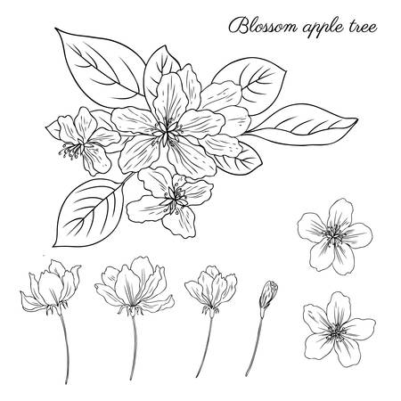 Apple tree blossom flower, bud, leaves, branch vector engraving botanical sketch hand drawn isolated on white, vintage romantic style for greeting card, package design  cosmetic, wedding invitations